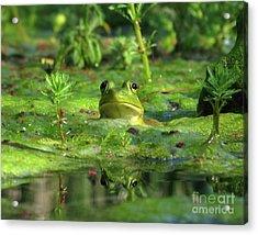 Frog Acrylic Print by Douglas Stucky
