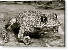 Frog Hair Acrylic Print by Kim Pippinger
