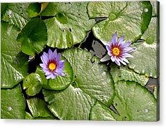 Frog Heaven Acrylic Print