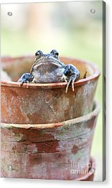 Frog In A Pot Acrylic Print by Tim Gainey