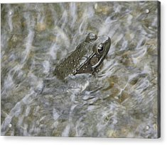 Frog In Rippling Water Acrylic Print by Cim Paddock