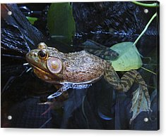 Acrylic Print featuring the photograph Frog Legs Did Someone Say Frog Legs by Rhonda McDougall