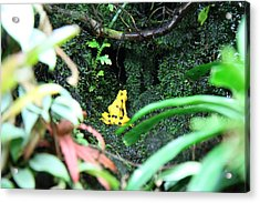 Frog - National Aquarium In Baltimore Md - 12121 Acrylic Print by DC Photographer