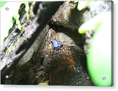Frog - National Aquarium In Baltimore Md - 12122 Acrylic Print by DC Photographer