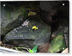 Frog - National Aquarium In Baltimore Md - 12125 Acrylic Print by DC Photographer