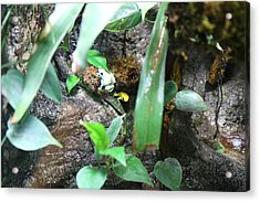 Frog - National Aquarium In Baltimore Md - 12126 Acrylic Print by DC Photographer