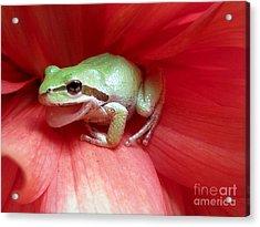 Frog On Dahlia Acrylic Print by Irina Hays