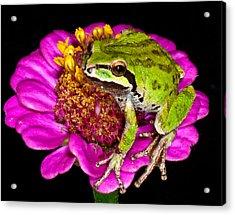 Frog  On Flower Acrylic Print by Jean Noren