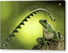 Frog On Green Background Acrylic Print by Dirk Ercken