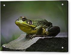 Frog Outcrop Acrylic Print by Christina Rollo