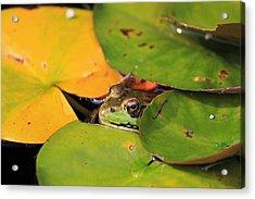 Frog Pond 3 Acrylic Print