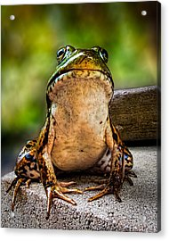 Frog Prince Or So He Thinks Acrylic Print by Bob Orsillo