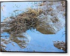 Frog Puddle Acrylic Print