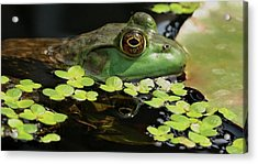 Frog Reflection Acrylic Print by Barbara S Nickerson