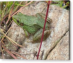 Acrylic Print featuring the photograph Frog by Robert Nickologianis
