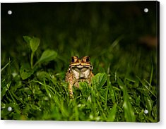 Acrylic Print featuring the photograph Frog Stare by Mike Lee