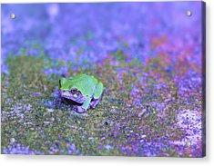 Frogger Acrylic Print