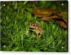 Acrylic Print featuring the photograph Froggie by Mike Lee