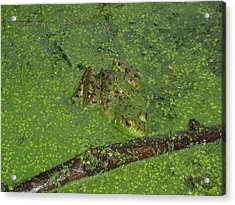 Acrylic Print featuring the photograph Froggie by Robert Nickologianis
