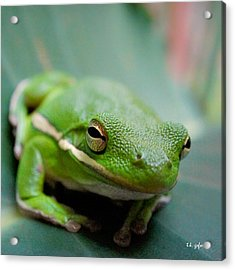 Acrylic Print featuring the photograph Froggy Smile Squared by TK Goforth