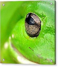 Frog's Eye Acrylic Print by Kaye Menner