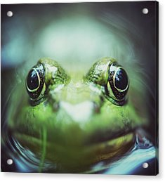 Frogs Level Acrylic Print by Shaunl