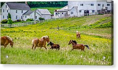 Frolicking Acrylic Print by Guy Whiteley