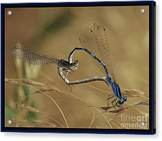 Love Bugs From The Heart Acrylic Print
