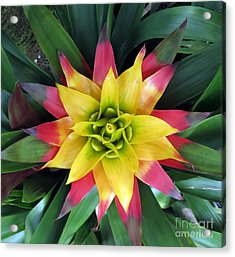 From The Top Down Acrylic Print by Darleen Stry