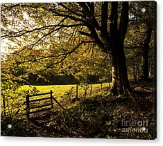 From Woods To Fields Acrylic Print by Anne Gilbert