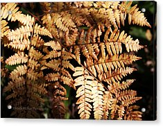 Frond Close Up Acrylic Print