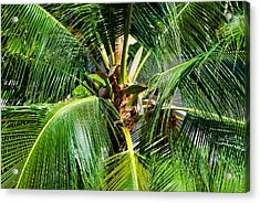 Fronds And Center Acrylic Print