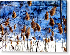Acrylic Print featuring the photograph Fronds In Winter by Eleanor Abramson