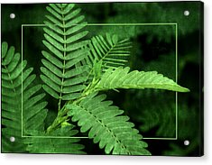 Fronds Acrylic Print by Nikolyn McDonald