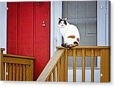 Front Porch Cat Acrylic Print