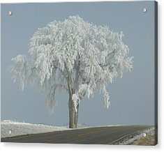 Acrylic Print featuring the photograph Frost Covered Lone Tree by Penny Meyers