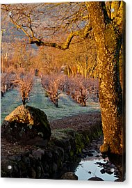 Frost In The Valley Of The Moon Acrylic Print by Bill Gallagher