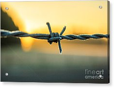 Frost On Barbed Wire At Sunrise Acrylic Print