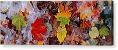 Frost On Leaves, Vermont, Usa Acrylic Print