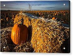 Frost On My Pumpkin Acrylic Print by Joy McAdams