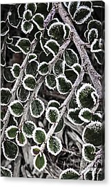 Frost On Plant Branch In Late Fall Acrylic Print