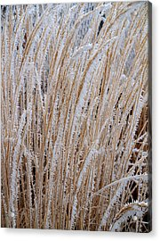 Frost On The Grass Acrylic Print