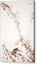 Frosted Berry Delight Acrylic Print by Marie-Dominique Verdier
