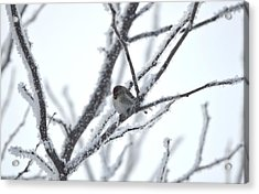 Acrylic Print featuring the photograph Frosted Branches by Dacia Doroff