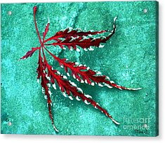 Frosted Japanese Maple Acrylic Print