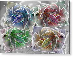 Frosted Maple Leaves Pop Art Shades Acrylic Print by J McCombie