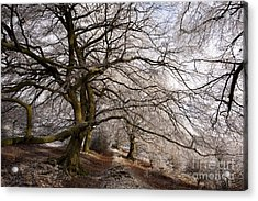 Frosted Path Acrylic Print by Anne Gilbert