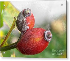 Acrylic Print featuring the photograph Frosted Rosehips by Nina Silver
