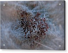 Frosted Rugosa Acrylic Print by Susan Capuano