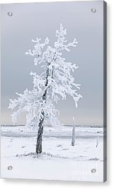 Frosted Tree Acrylic Print by Tim Grams